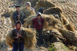 North Korean field laborers